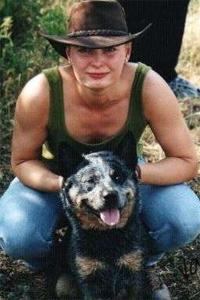 Australian Cattle dog nach dem Herding