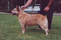 AUS Ch. Justoz Bertha Bear