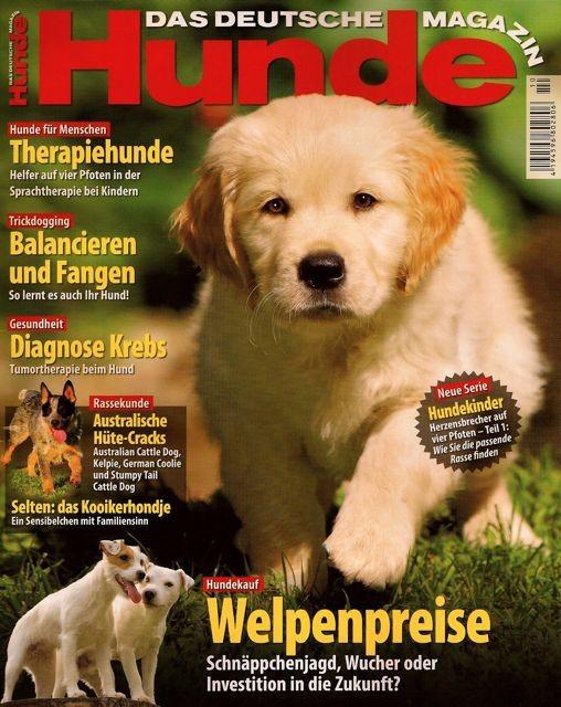 hunde helfen menschen